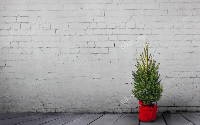 Европейская (удмуртская) елка в горшке