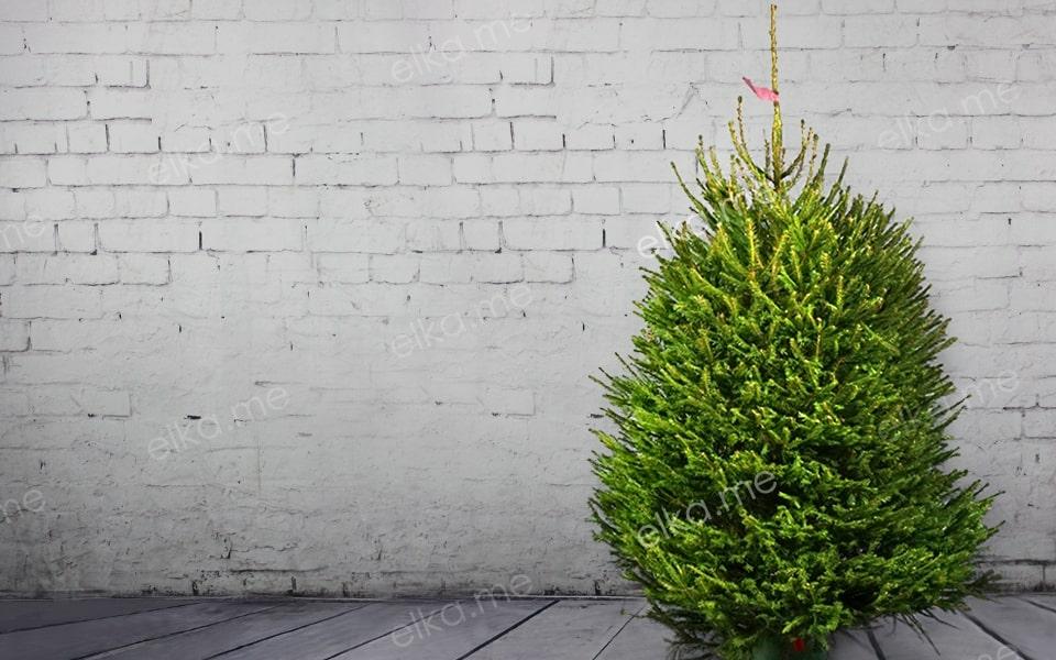 Европейская (Удмуртская) елка